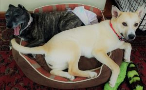 two-dogs-cuddling-in-a-dog-bed